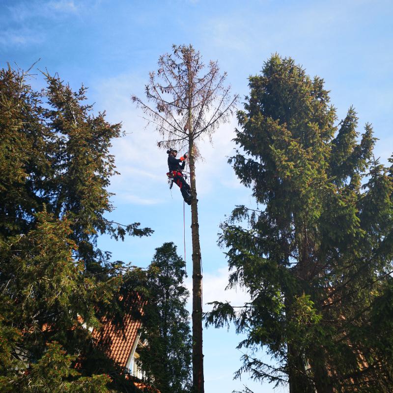 wycinka drzew i krzewów gdańsk gdynia sopot