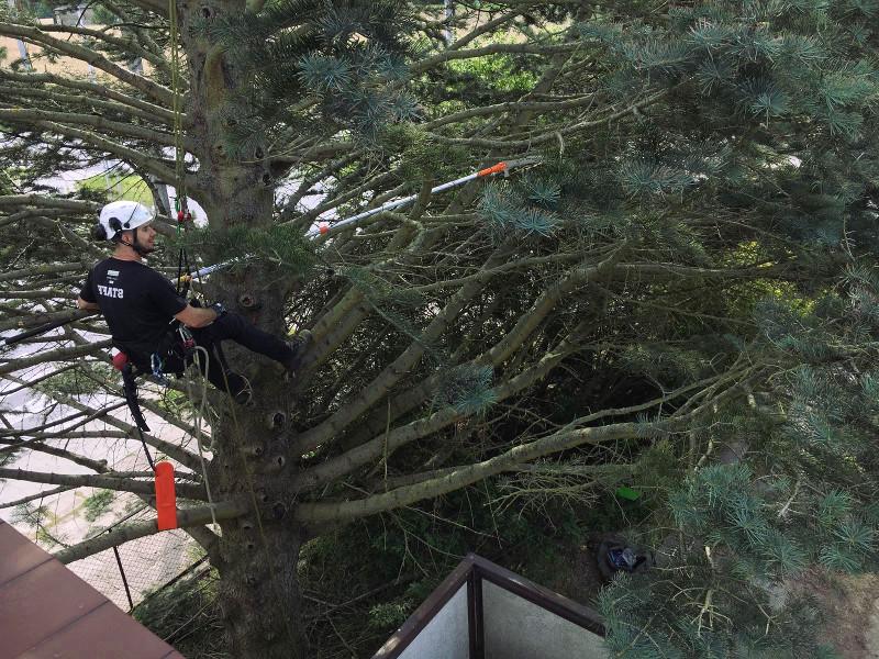 pielęgnacja drzew gdańsk