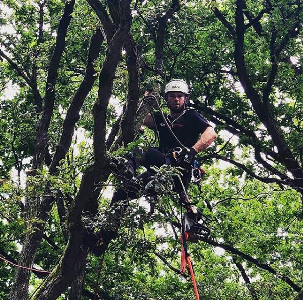 pielęgnacja drzew arborysta