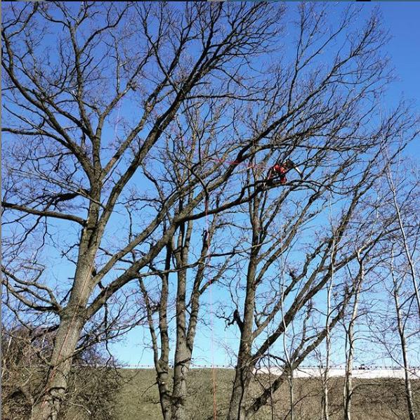 Pielęgnacja drzew – czy aby na pewno konieczna?
